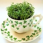 Мікрозелень: ростимо вітаміни на підвіконні цілий рік