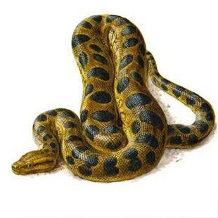 Найбільша змія в мире