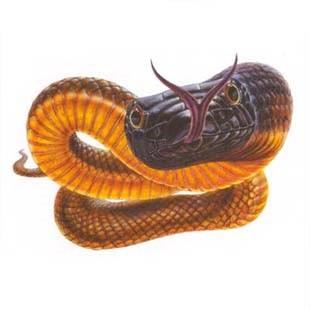 Сама отруйна змія в мире