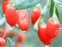 Тибетські ягоди годжі