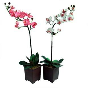 Догляд за кімнатної орхідеєю