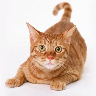 Догляд за кішкою після стерилізації
