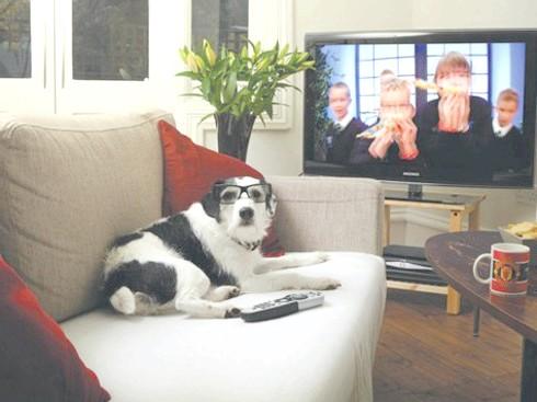 В америці з'явився телеканал для собак