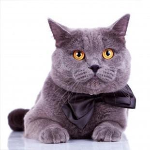 У якому віці каструвати котів