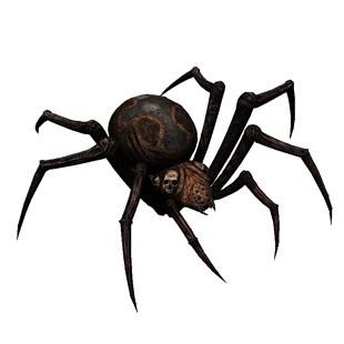 Бачити у сні павука